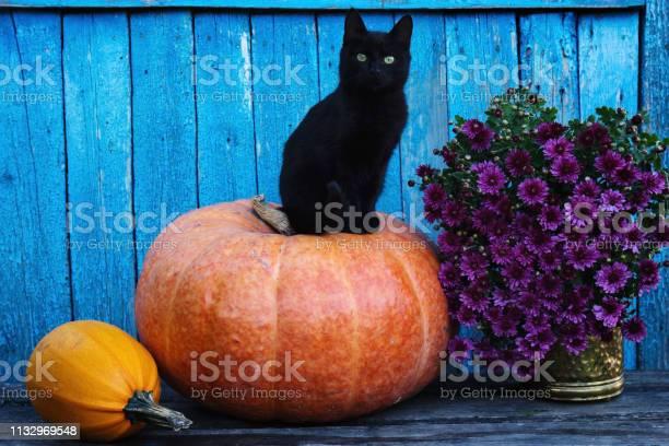 Black cat sitting on a pumpkin picture id1132969548?b=1&k=6&m=1132969548&s=612x612&h=elk drfcn7eju l6dgc4tg sj7hner9rhh6hscvsixw=