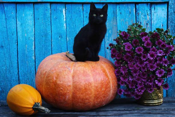 Black cat sitting on a pumpkin picture id1132969548?b=1&k=6&m=1132969548&s=612x612&w=0&h=v8n1rj9hqb6ereniwpe1k3wq8uxwlocdw0m5xb9v6xu=