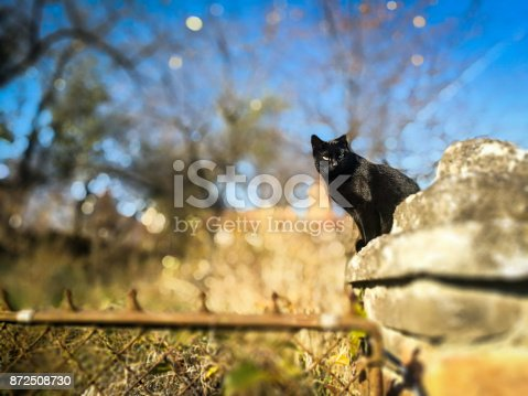 Horizontal color image depicting a black cat sitting on an old stone wall in the countryside. Behind the cat, the rural background of grassland and trees are blurred attractively out of focus. Focus is sharp on the cat in the foreground. Plenty of room for copy space.