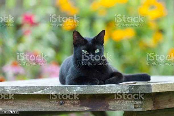 Black cat sitting on garden furniture picture id951856862?b=1&k=6&m=951856862&s=612x612&h=8cteewat2t xjcgezyetl ikzbrii4nhz c3ni5xk98=