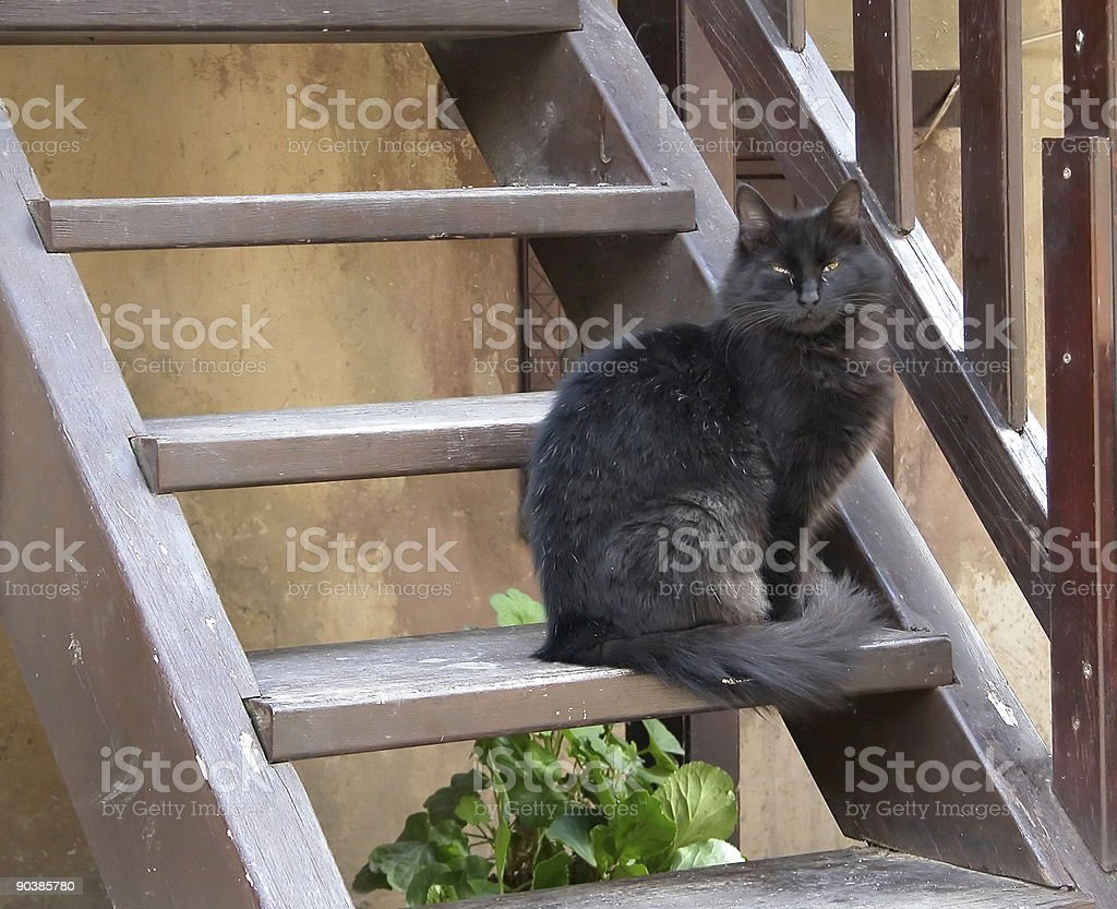 Black Cat sitting on stairs royalty-free stock photo
