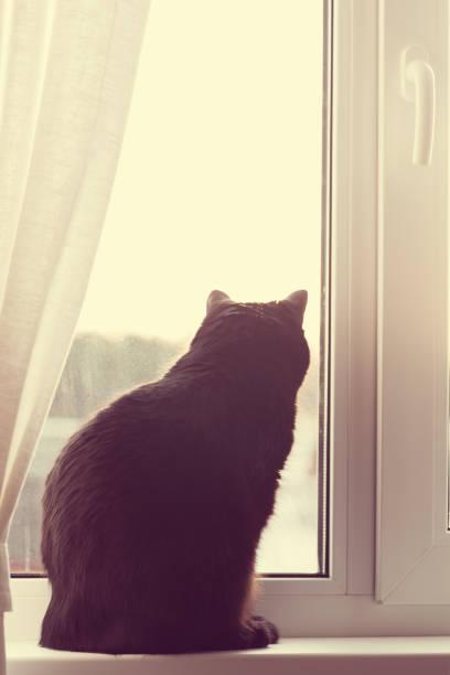 Black cat sitting on windowsill picture id1064220408?b=1&k=6&m=1064220408&s=612x612&w=0&h=sbgb kqrangncae3 qktmkhqavdscmgscsnpt4onej8=