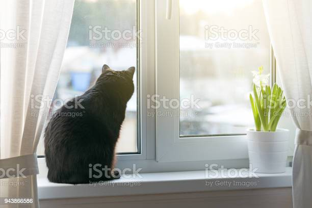 Black cat sitting on windowsill picture id943866586?b=1&k=6&m=943866586&s=612x612&h=ipbkcjb0z6g5upvgihvw7swrzmar4vbbwn68flxab1s=