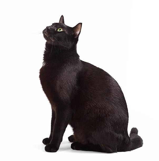 Black cat sitting picture id513382248?b=1&k=6&m=513382248&s=612x612&w=0&h=wgnnu v30xo3xsqkpasysyglzjjfx0ku32o6 av9chu=