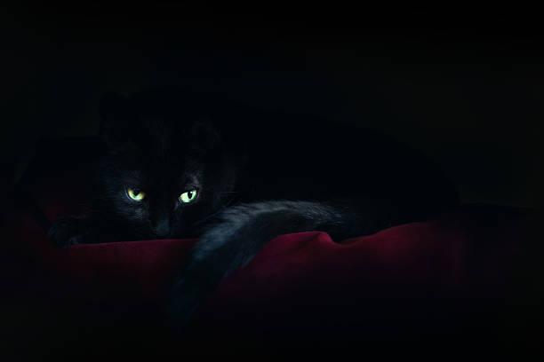 Black cat sleeping in moonlight picture id622211172?b=1&k=6&m=622211172&s=612x612&w=0&h=rrslfehy5p0xxdn0 quuyv0vaojcai5 sb506rzkml0=