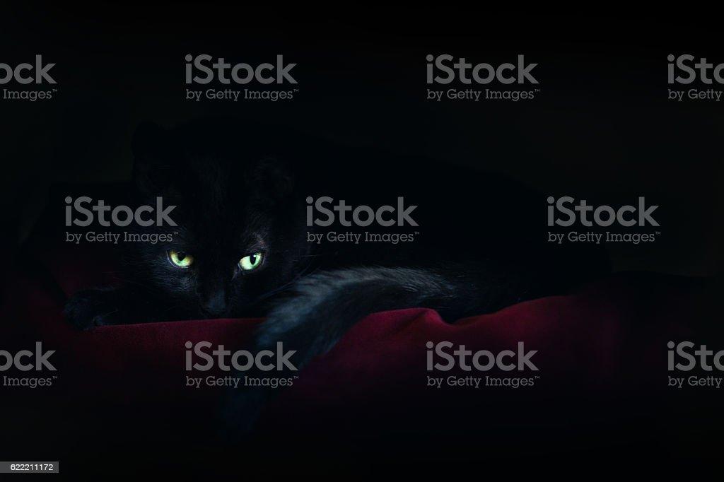 Black Cat Sleeping In Moonlight stock photo