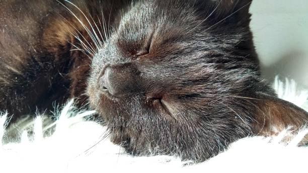 Black Cat Sleeping in Sunlight stock photo