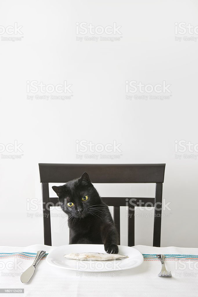 Black cat snatch a fish stock photo