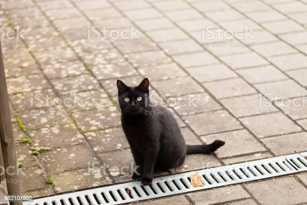 Black cat standing on cobblestones looks into camera picture id952107502?b=1&k=6&m=952107502&s=612x612&h=d8n6zh4fsrwgq0oiqc3xkwr68rd1mdcb9xc86vrifau=