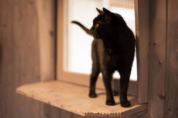 Black cat standing on window sill picture id969501450?b=1&k=6&m=969501450&s=612x612&w=0&h=v0n2xggshveu7hxvffljwbvbgr8z cjxnm0t00foygg=