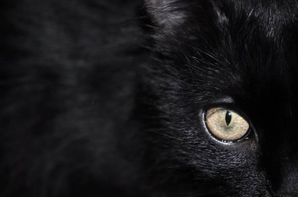 Black cat standing picture id1045550952?b=1&k=6&m=1045550952&s=612x612&w=0&h=bvkiclsolwgpbixzszpgrxs qjnnj7hztnznkx z ca=