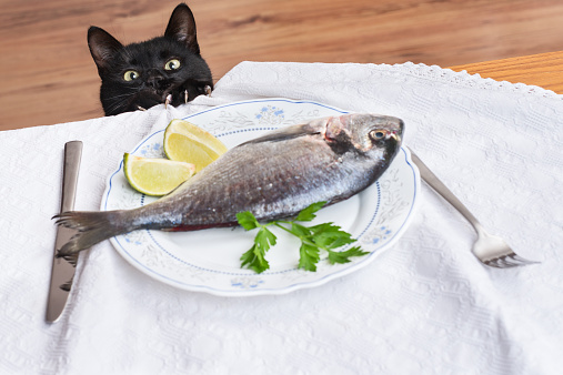 Black cat holding with its claws on the edge of the table staring at the fish
