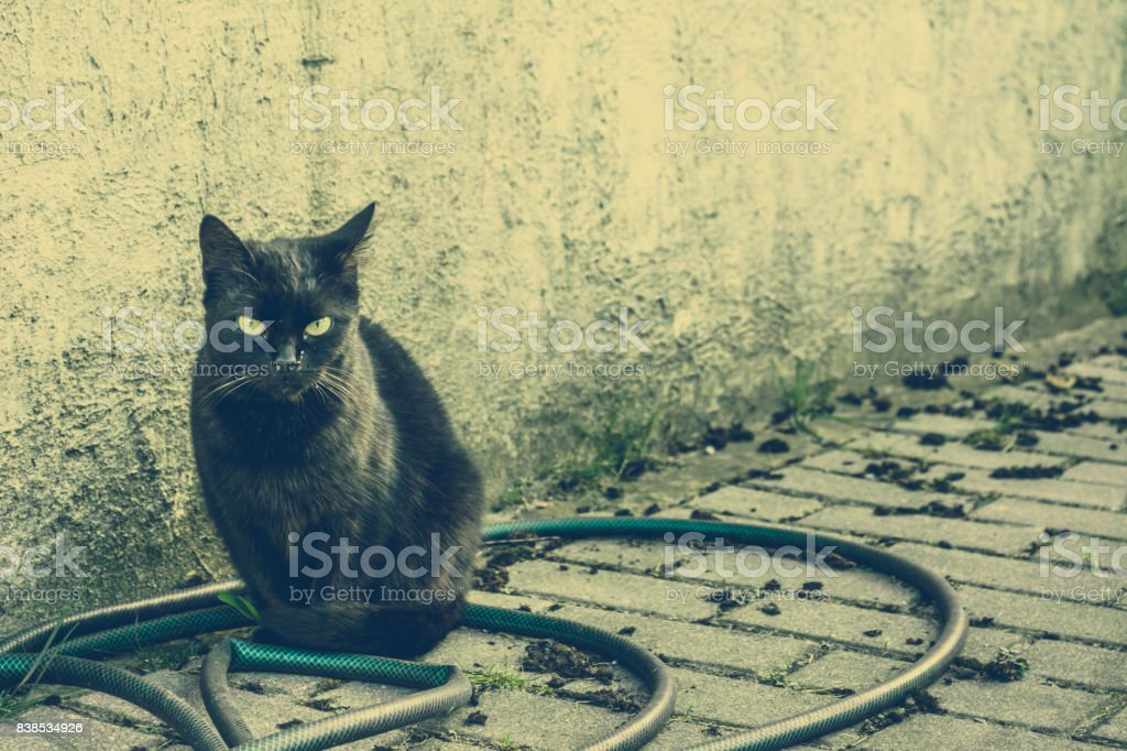 Black cat, stray animals concept, vintage photo
