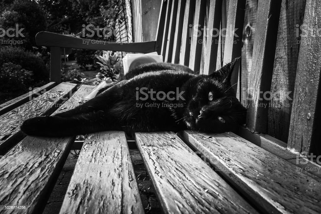 Fine Black Cat Stretching Out On A Garden Bench Stock Photo Inzonedesignstudio Interior Chair Design Inzonedesignstudiocom