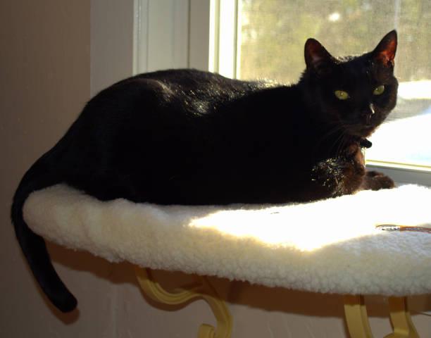 Schwarze Katze, Sonnenbaden im Fenster – Foto