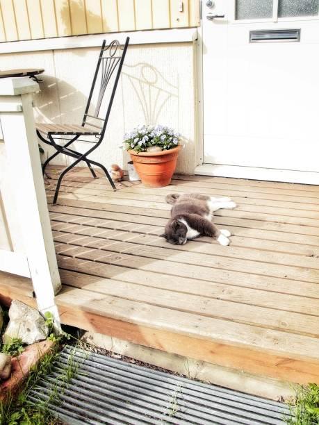 svart katt sola på verandan - malin strandvall bildbanksfoton och bilder