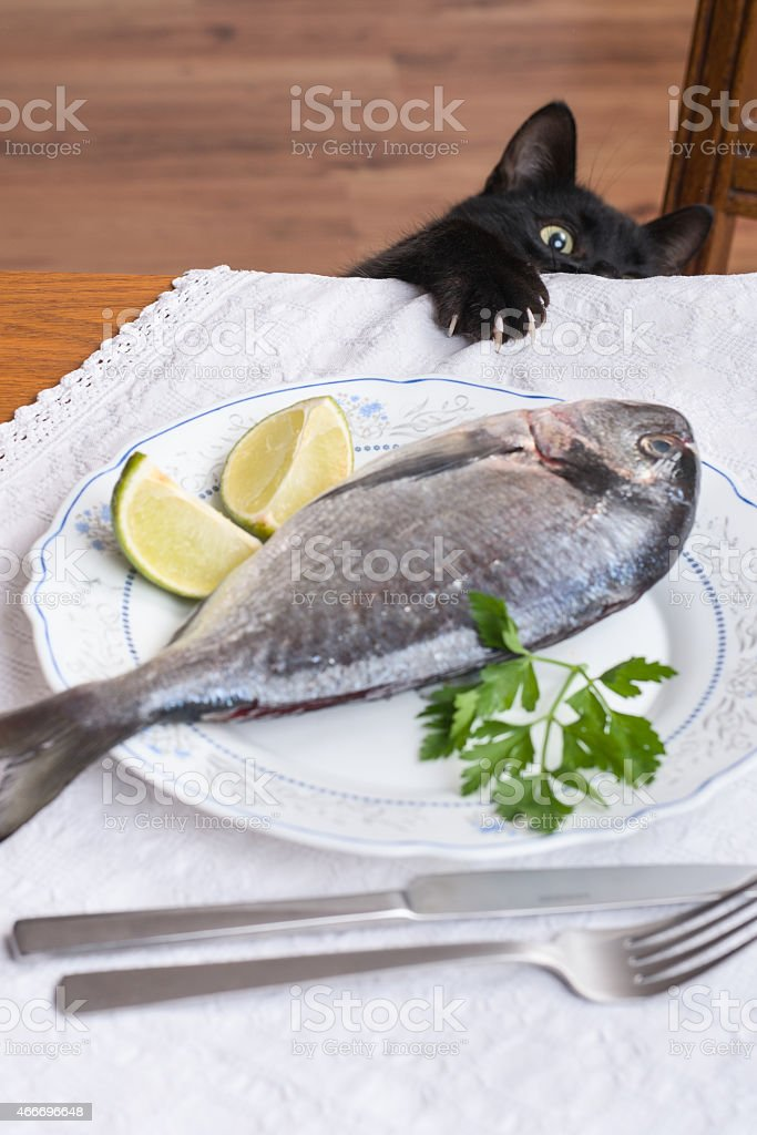 Black cat thief sneaking at the dinner table stock photo