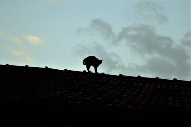 Gato preto em cima do telhado picture id855184252?b=1&k=6&m=855184252&s=612x612&w=0&h=zy3axeh2h8wlf kyh1 gwsln0owrzr92qzg4rdm70y4=
