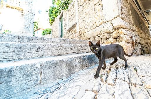 Black cat walking on a stone pavement