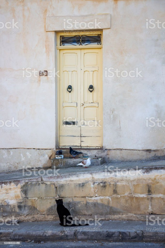 Black cat watching three pigeons in front of a house in Birgu, Malta stock photo