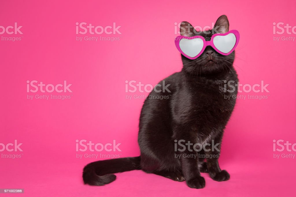 Black Cat Wearing Heart Glasses on Pink Background foto stock royalty-free