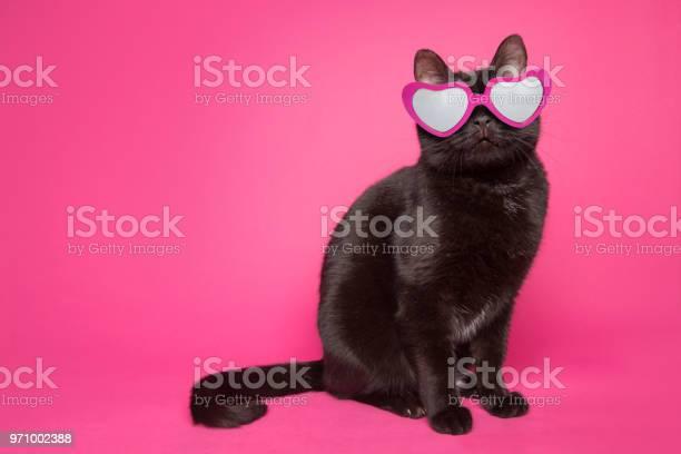 Black cat wearing heart glasses on pink background picture id971002388?b=1&k=6&m=971002388&s=612x612&h=fdw08hfsn7socuyrlbaoh1yzwtmlqdl g9 u97vxkk8=