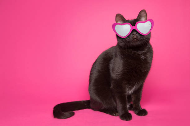 Black Cat Wearing Heart Glasses on Pink Background An adorable black cat wearing heart-shaped glasses sitting on a pink background. animal valentine stock pictures, royalty-free photos & images
