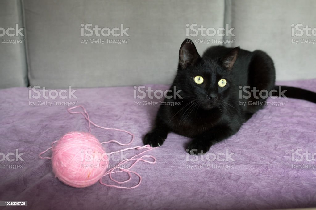 Black cat with ball of wool