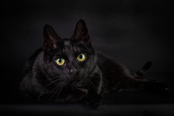 Black cat with big yellow eyes on a black background Black cat with a black background, lying on his side and staring at you with big yellow eyes black cat stock pictures, royalty-free photos & images
