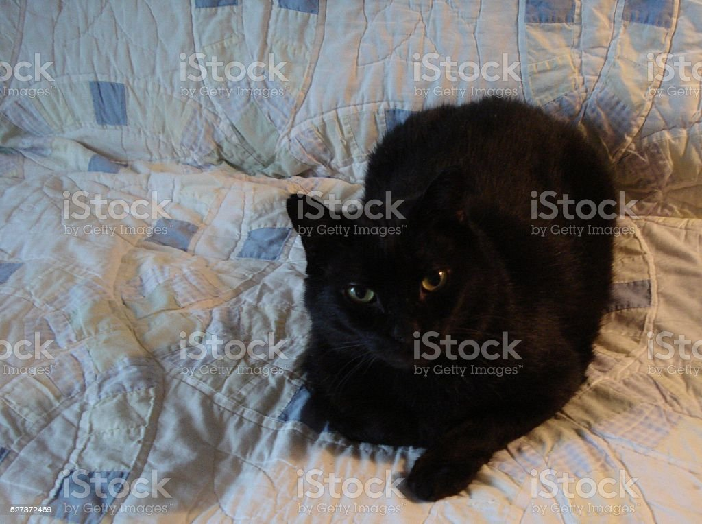 Black Cat with Bright Eyes stock photo