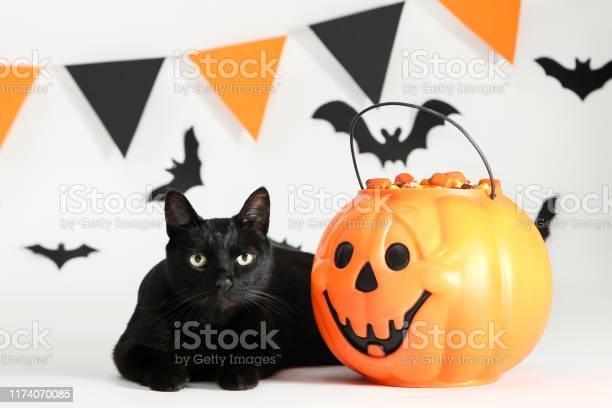 Black cat with candies in halloween bucket and paper bats on white picture id1174070085?b=1&k=6&m=1174070085&s=612x612&h=5hk1j 559xpwuidtnviy2ndwkbucsdzt3ij1z41dt s=