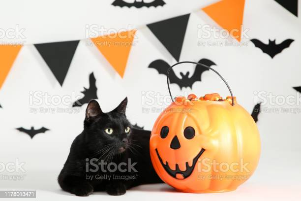 Black cat with candies in halloween bucket with paper bats and flags picture id1178013471?b=1&k=6&m=1178013471&s=612x612&h=dofxio6 9qilr5vb3f r5uqfvzmnvmw6pqo341jfuvg=
