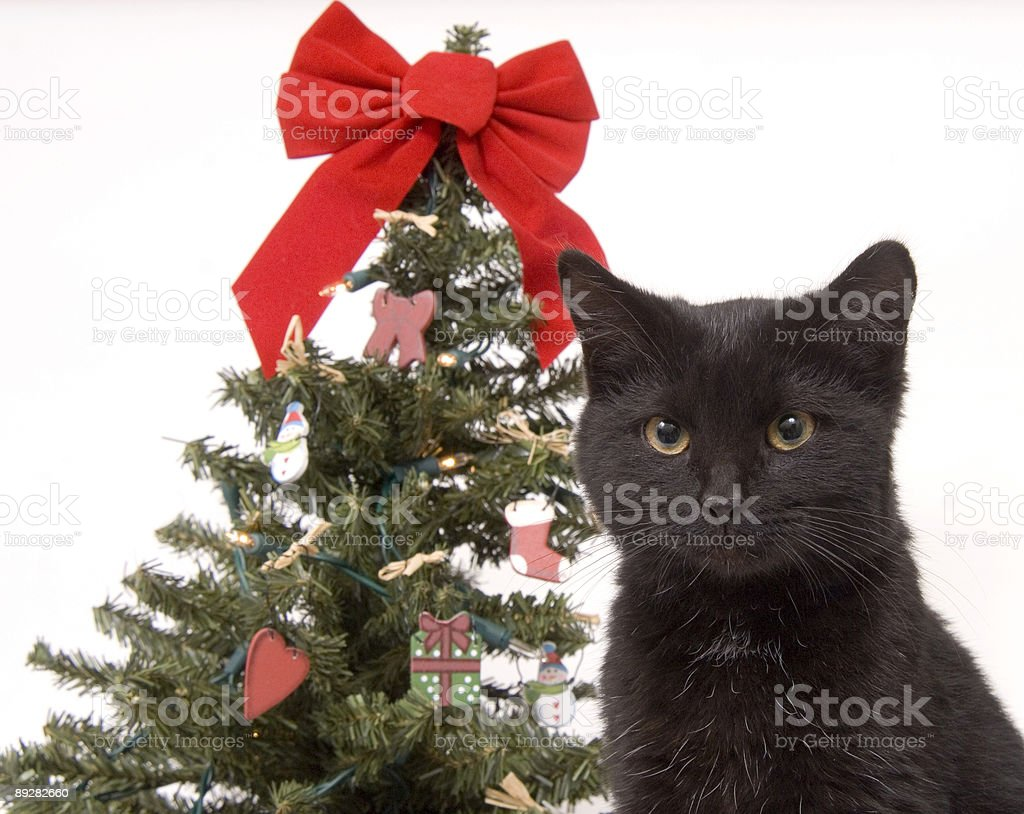 black cat with christmas tree in background royalty free stock photo