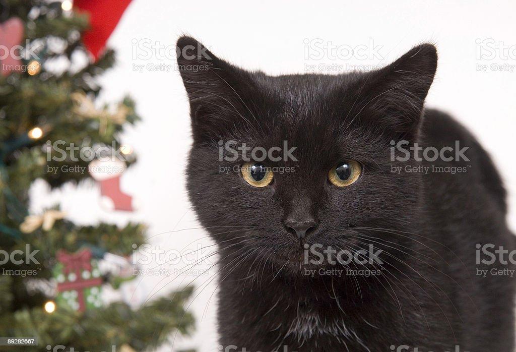 animal christmas christmas decoration christmas ornament christmas tree black cat