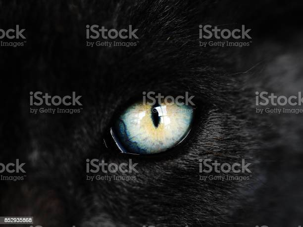 Black cat with colorful orange and blue eye picture id852935868?b=1&k=6&m=852935868&s=612x612&h=4evbqvwt4lsz76pjurhttc0mevz m8w8bo vavls f0=