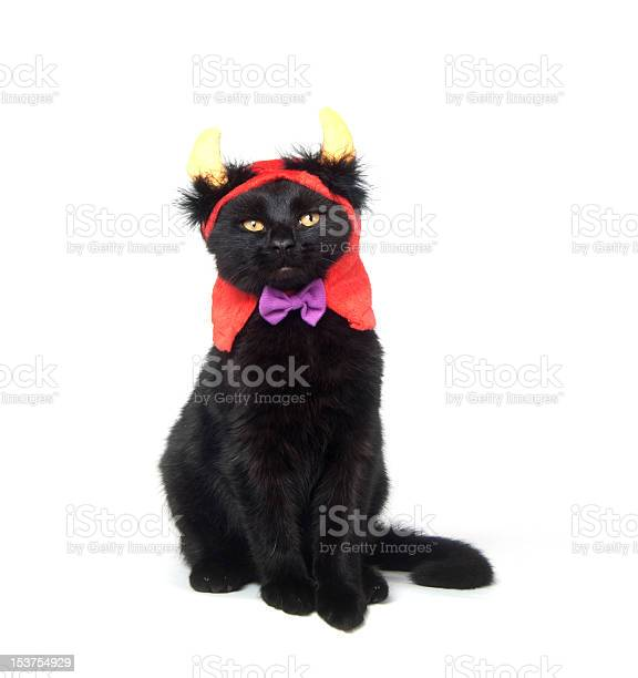 Black cat with devil horns picture id153754929?b=1&k=6&m=153754929&s=612x612&h=akyeigavbepw43cxpkgukpvgihhcjfxiiafdie4nes8=