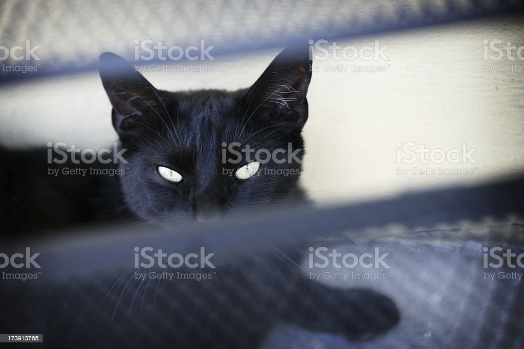 Black Cat with Golden Eyes royalty-free stock photo