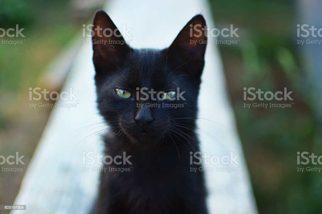 Black cat with green eyes looking at camera. stock photo