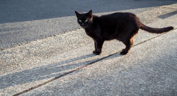 Black cat with green eyes on road crossing path picture id1148007978?b=1&k=6&m=1148007978&s=612x612&w=0&h=rhnttrio1zkhawy aoaqraron ta8fk5fwqsqjgjrba=