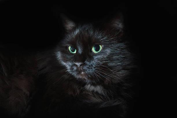 Black cat with green eyes picture id487294812?b=1&k=6&m=487294812&s=612x612&w=0&h=sx  ydplzzvycbkajimy8tvtfcxelymyzwjr2wvo1zm=