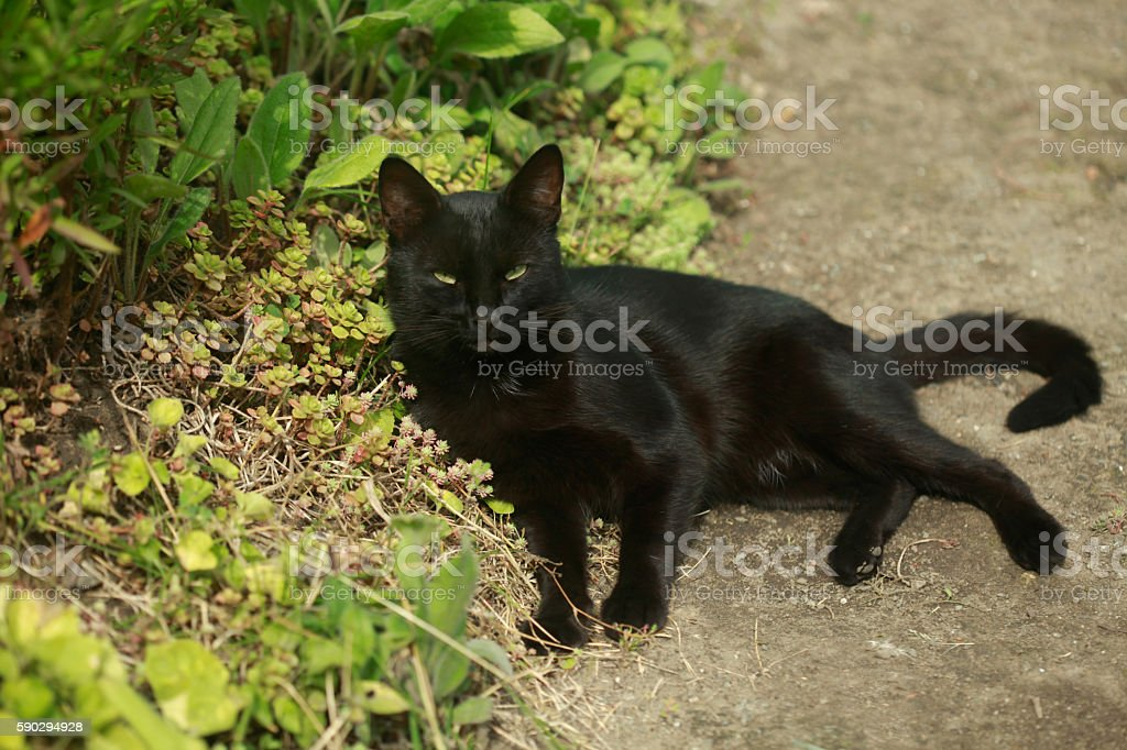 Черная кошка с зелеными глазами  Стоковые фото Стоковая фотография