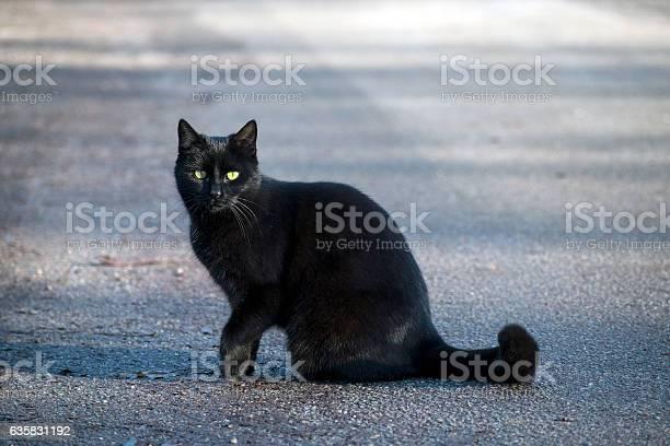 Black cat with greenyellow eyes sitting on the street picture id635831192?b=1&k=6&m=635831192&s=612x612&h=b8xu5klllhdasilrqxhj14l0ycjl odlikstaucn5p0=