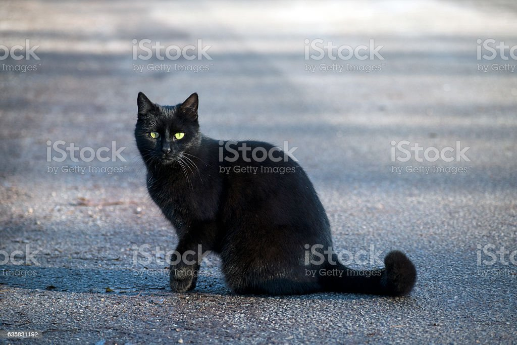 Black cat with green-yellow eyes sitting on the street stock photo
