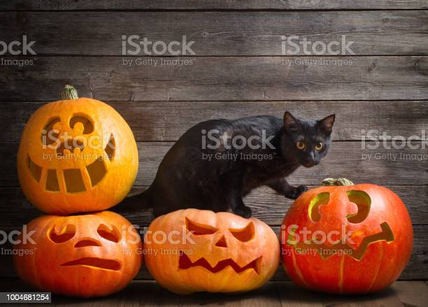 Black cat with orange halloween pumpkin on wooden background picture id1004681254?b=1&k=6&m=1004681254&s=612x612&h=kzilolnf6vfgtc6iehpvv4e0ziuwemxhy3ace0bgxpk=