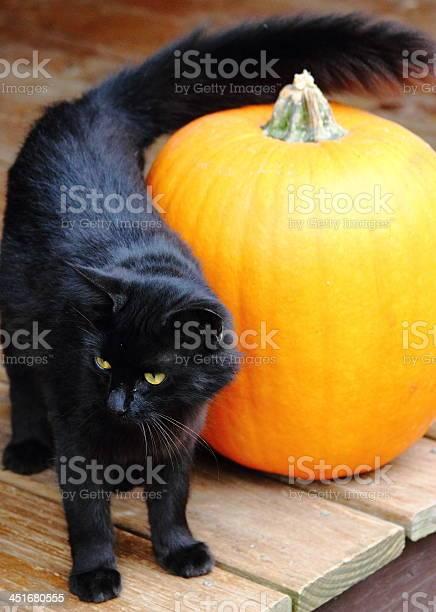 Black cat with orange pumpkin picture id451680555?b=1&k=6&m=451680555&s=612x612&h=qfw6nzitouzlvbazkjqz 0mxfsqim2lwaw cismnl4u=