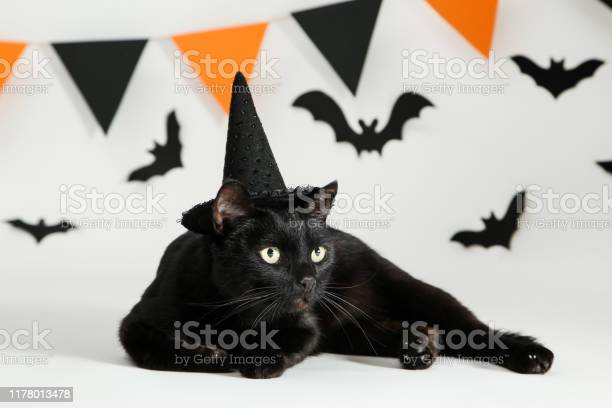 Black cat with paper bats and flags on white background picture id1178013478?b=1&k=6&m=1178013478&s=612x612&h=k ac5jdv7n5jxz7v2r5w1s573yzqv2tjbndgnpdhtxy=