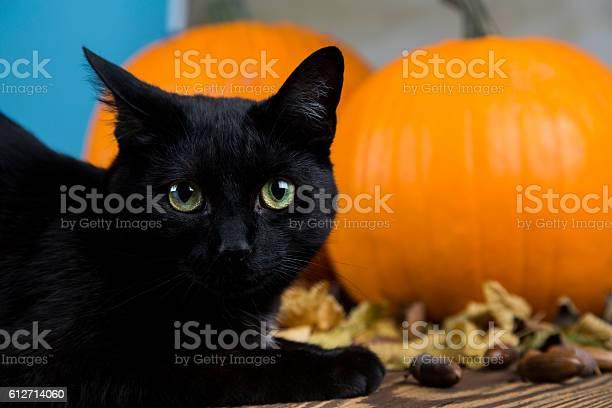 Black cat with pumpkin as a symbol of halloween picture id612714060?b=1&k=6&m=612714060&s=612x612&h=kgv7flowakcibfm lt5sp6lcqnznyebijbqoet eo e=