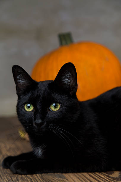Black cat with pumpkin as a symbol of Halloween