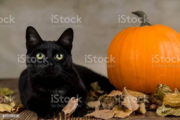 Black cat with pumpkin as a symbol of halloween picture id612715416?b=1&k=6&m=612715416&s=612x612&h=bykrof9gmw0gm1hl2p7lpveqe18ulws01e1haedph8e=