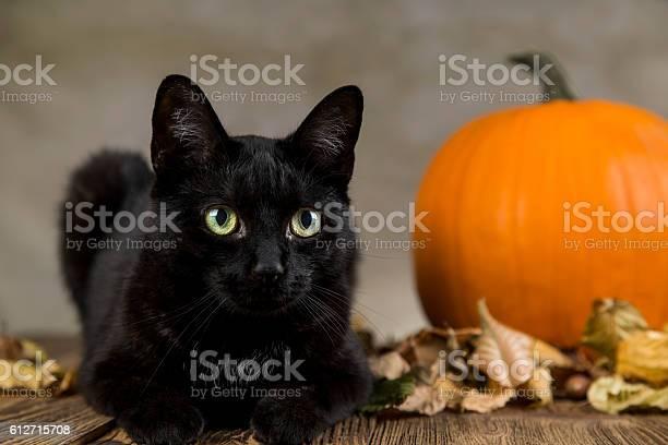 Black cat with pumpkin as a symbol of halloween picture id612715708?b=1&k=6&m=612715708&s=612x612&h=f9ksbrexu8xyuwtqicieizz4rf hftgxjj6qdpitttu=